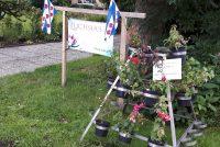 'Te koop: Fuchsia's'