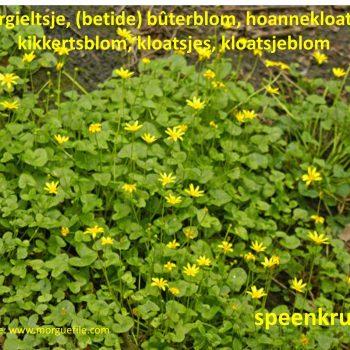 Sprekwiis – blommen en planten