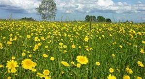 Rom baan foar natuer op provinsjale grûn