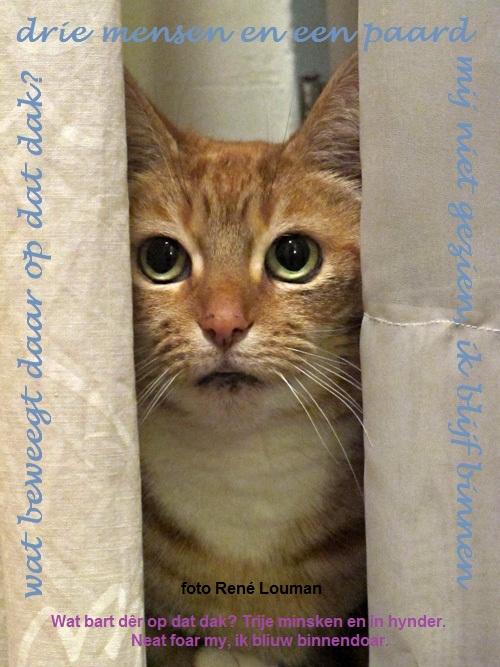 FH kat in de gordijnen   It Nijs