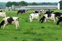 Oerisel hanthavenet net tsjin boeren dy't PAS-melding diene