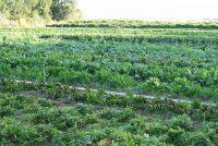 Boeren en túnkers sykje help publyk