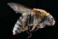 Bije- en ynsektemerk Park Hûs Olterterp