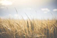 Temajûn oer in 'new deal' tusken boer en mienskip