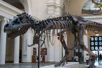 Nij soart dinosaurus ûntdutsen yn Kanada