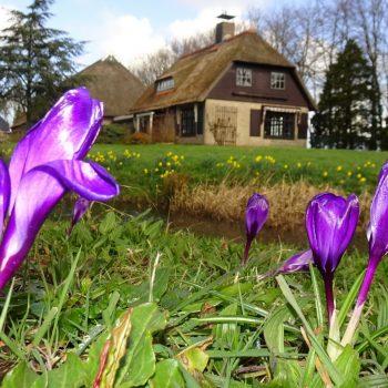 55.000 bloeiende blommen oan Stinzerûte Bûtenpost-Kollum