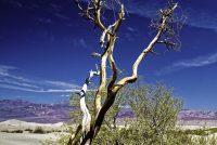 Temperatuer yn Death Valley rint op ta 54,5 graden