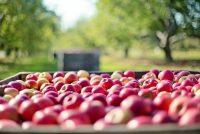 Boeren en túnkers diele apels út by fersoargingshuzen yn Fryslân