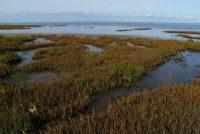 Klimaatbestindige kustlânskippen