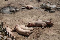 Feie Fonyk: Hawwe dieren dan gjin rjochten?