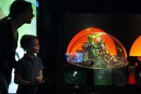 Hjerstfakânsje yn it Natuermuseum Fryslân