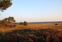 Natuergebieten op de Feluwe yn briedseizoen ôfsletten